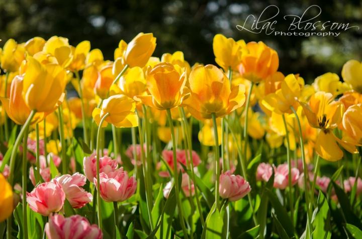 Flowers-3184